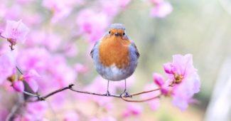 Птичка кацнала на дръвче